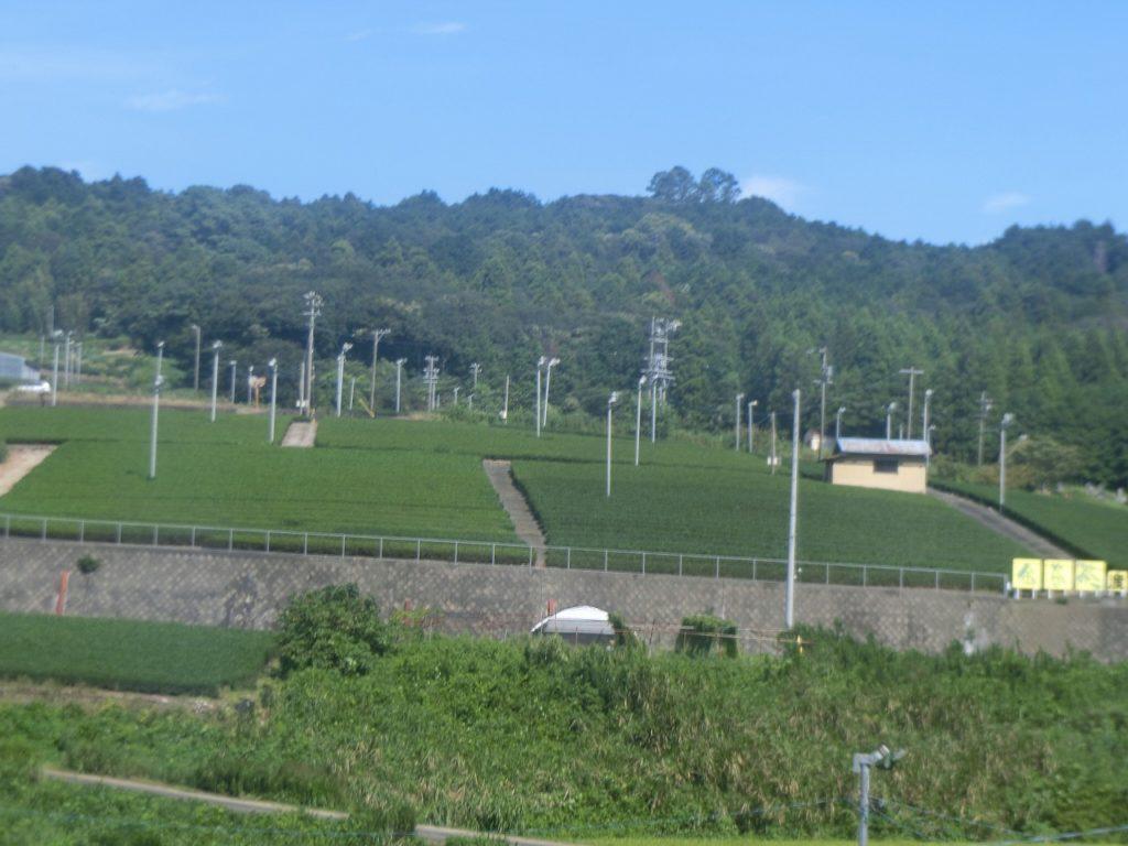 東海道本線からの茶畑の車窓