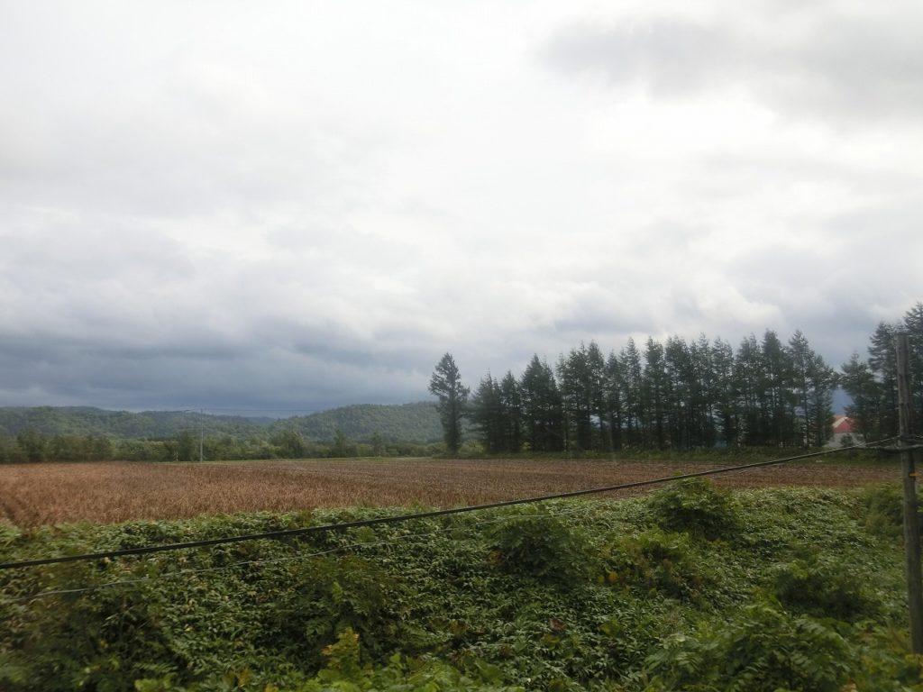 釧網本線の針葉樹の防風林